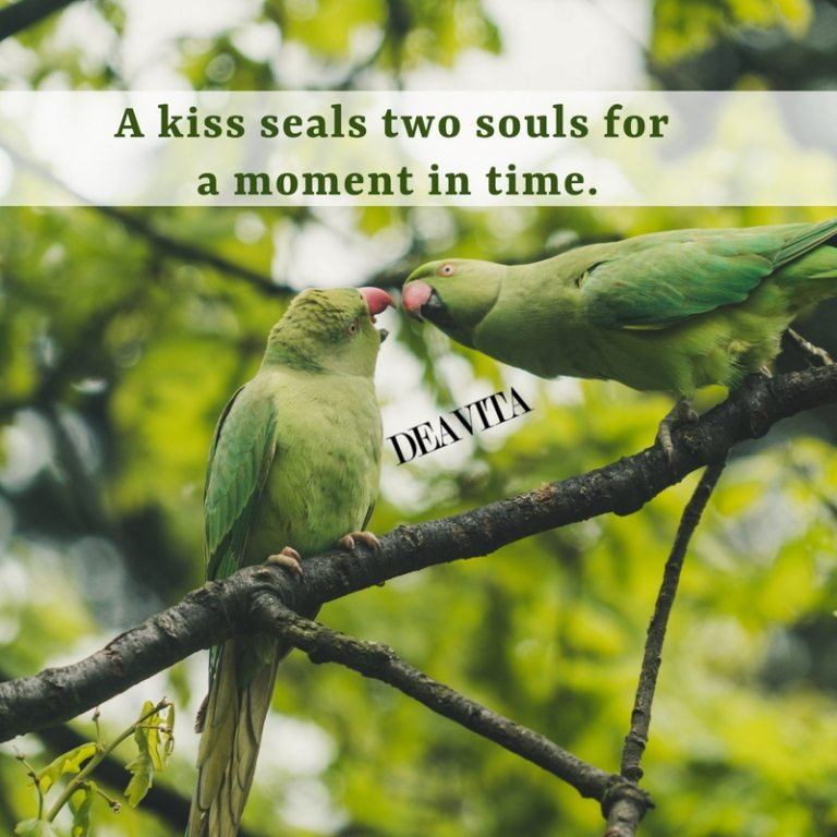 best short quotes kiss seals two souls for a moment in time