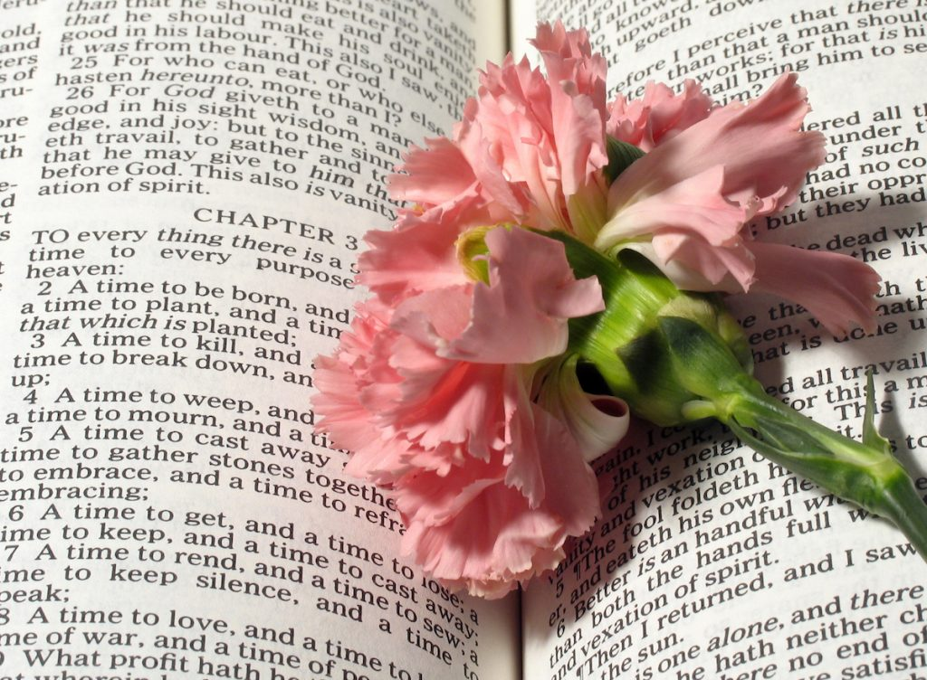 Ecclesiastes Chapter Three with a pink carnation on the pages