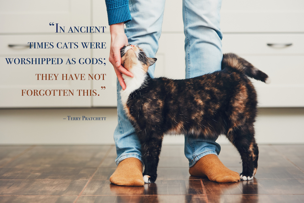 Domestic life with pet. Cat welcome his owner (young man) at home. Cat quotes: in ancient times cats were worshipped as gods; they have not forgotten this.