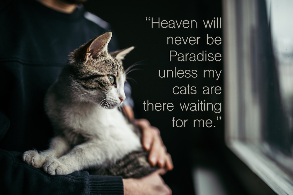 Beautiful cat in arms of her owner standing by the window at home. cat quote: heaven will never be paradise unless my cats are there waiting for me.