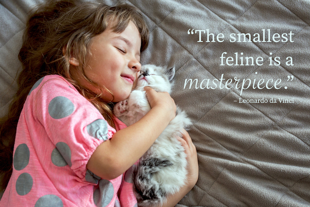 Smiling girl and little cat lying down on the bed. Cat Quote: The tiniest feline is a masterpiece.